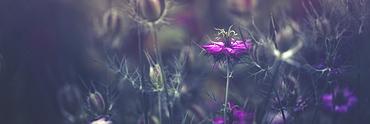 Purple Blossoms, Prague, Czech Republic
