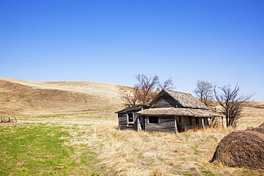 Lonely, Dilapitated, Abandoned Homestead On The Prairies Surrounded By Dying Grass, Trees And Hay Bales, Carbon, Alberta, Canada