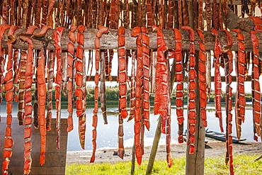Chum Salmon Strips Drying In A Smoke House, Shungnak, Arctic Alaska, Summer