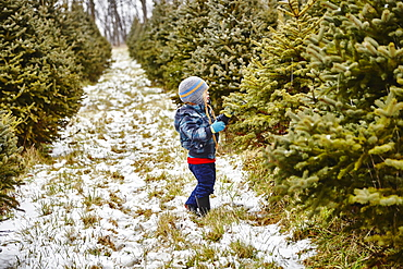 Young Boy Looking For A Christmas Tree, Stoney Creek, Ontario, Canada