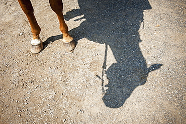 Horse Legs And Shadow Of Horse Head, Hampstead, Maryland, United States Of America