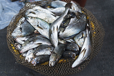 Fish Basket In Street Market From Villages Around Xiapu City, Famous Place For Chinese Traditional Fishing, Xiapu, Fujian, China