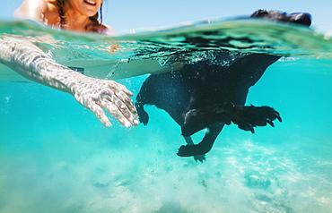 Woman And Her Pet Labrador Swimming Together, Bolonia, Tarifa, Costa De La Luz, Andalusia, Spain