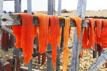Arctic Char Filets On Drying Racks, Arctic Ocean, Near Cambridge Bay, Nunavut, Canada
