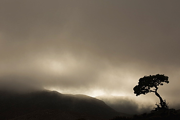 Silhouette Of A Tree Against A Stormy Sky In Richtersveld National Park, South Africa