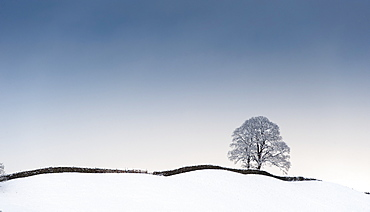 Isolated Tree On A Snow Covered Ridge, Wensleydale, North Yorkshire, England