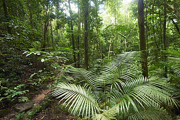 Mossman Gorge Daintree National Park, The Oldest Rainforest In The World, Queensland Australia