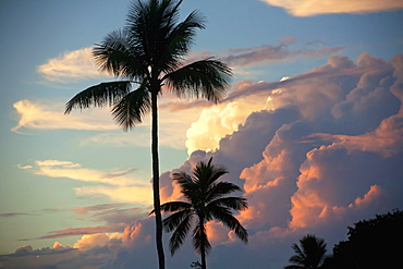 Clouds Glowing At Sunset And Palm Trees, Maui, Hawaii, United States Of America