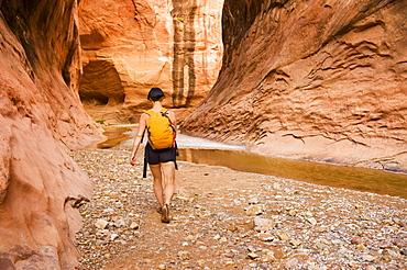 Female Adventurer Exploring A Desert Canyon Narrows, Capitol Reef National Park, Utah, United States Of America