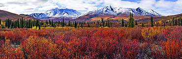 Autumn Colours Brighten The Landscape In Tombstone Territorial Park, Along The Dempster Highway, Yukon, Canada