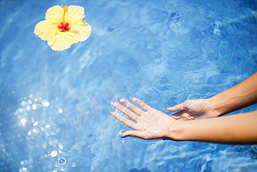 Dipping Hands In The Water With A Floating Flower, Island Of Hawaii, Hawaii, United States Of America