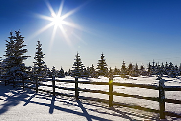 A Silhouette Wooden Log Fence In A Snow Covered Field With Snow Covered Evergreen Trees A Sun Burst And Blue Sky, Calgary, Alberta, Canada
