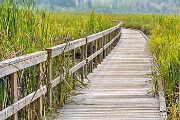 Ominik Marsh Boardwalk, Riding Mountain National Park, Manitoba, Canada
