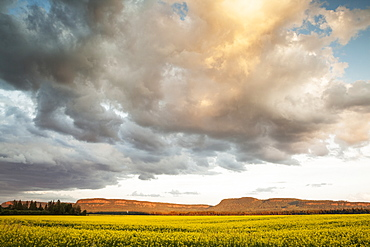 Sunset Over A Canola Field, Thunder Bay, Ontario, Canada
