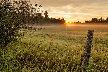 Sunrise Over Dewy Grass Field, Thunder Bay, Ontario, Canada