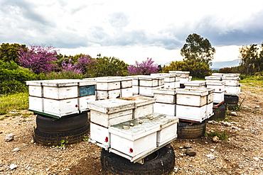 Wooden Frames For Beekeeping, Israel