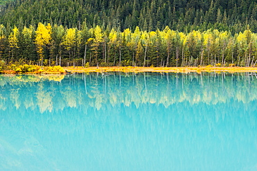 Autumn Colors Of Birch Trees Reflect In The Turquoise Glacial Pond, Portage Valley, Chugach National Forest, Southcentral Alaska