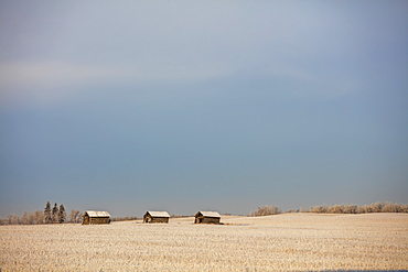 Old Out Building On Farm Land, Central Alberta, Alberta, Canada