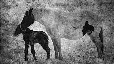 Horses, Mare And Foal, Alberta, Canada