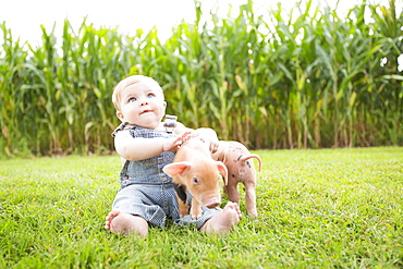 Infant Boy Playing With Little Pigs On A Farm In Northeast Iowa In Summertime, Iowa, United States Of America
