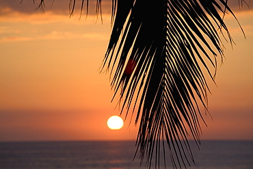 Palm Leaf At Sunset, Oahu, Hawaii, United States Of America