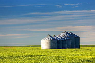 Large Metal Grain Bins In A Green Wheat Field With Blue Sky And Clouds, East Of Calgary, Alberta, Canada