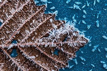 Close Up Of Frost On Leaf, Southeast Alaska, Alaska, United States Of America