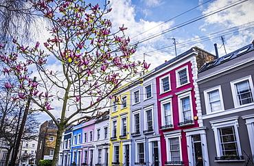 Colourful Row Housing Near Portobello Road, London, England