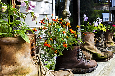 View Of Flowers Growing In Old Hiking Boots On The Historic Boardwalk, Alaska, Seldovia, Summer, Usa.