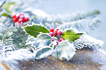 A Holly Branch With Berries And Fir Boughs Covered In Frost On A Wooden Board In Selective Focus, British Columbia, Canada
