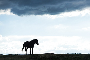Silhouette Of Of A Wild Horse, Theodore Roosevelt National Park, North Dakota, United States Of America