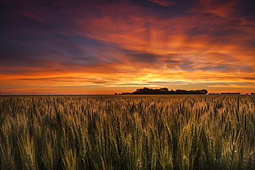 Colourful Sky At Sunrise Over A Wheat Field, Saskatchewan, Canada