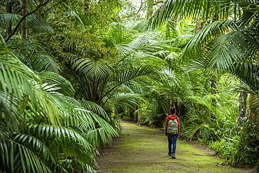 Young Woman Walking In Terra Nostra Botanical Park, Furnas, Sao Miguel, Azores, Portugal