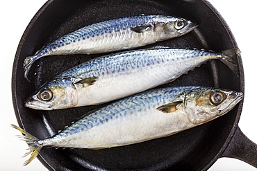 Three Whole Mackerel Fish In A Cast Iron Skillet And A White Background, Calgary, Alberta, Canada