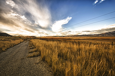 Grass Growing Along A Gravel Road, Utah, United States Of America