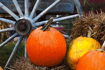 Pumpkins And Wagon Wheel, Stowe, Vermont, United States Of America