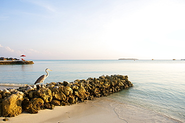 White Sand Beach With Perched Heron