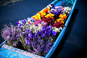 Flowers In The Bow Of A Shikara, A Kashmiri Canoe, Being Sold By A Flower Vender Or Hawker Who Paddles From Boat To Boat To Sell To Tourist And House Boat Owner, Srinagar, Kashmir, India