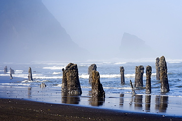 An old flooded forest is found on the Oregon Coast, Astoria, Oregon, United States of America