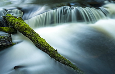 Mossy log and small waterfall, Liscomb Game Sanctuary, Nova Scotia, Canada