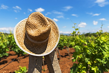 A Straw Hat Hanging On A Wooden Post In A Vineyard, Medjugorje, Bosnia And Herzegovina