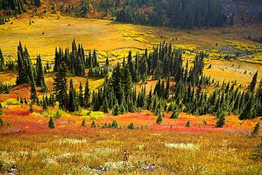Autumn, Mount Rainier National Park, Washington, Usa