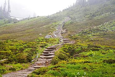 Washington, United States Of America; Fog Along A Trail In Mt. Rainier National Park