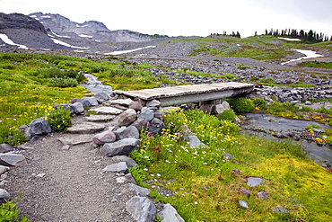 Washington, United States Of America; Wildflowers Along A Trail In Mt. Rainier National Park