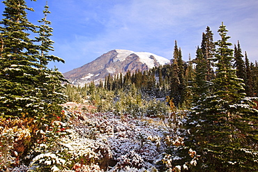 Washington, United States Of America; Fresh Snow Over Autumn Colors And Mount Rainier In Paradise Park In Mt. Rainier National Park