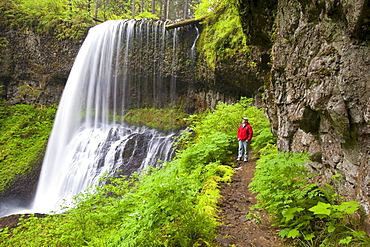 Oregon, United States Of America; A Man Standing By North Middle Falls In Silver Falls State Park