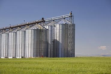 Large Grain Storage Bins On An Unripe Wheat Field; Alberta, Canada