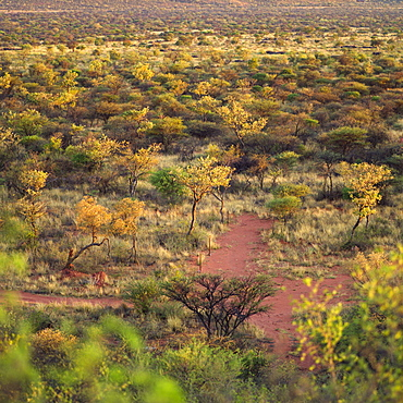 Wilderness, Namibia, Africa