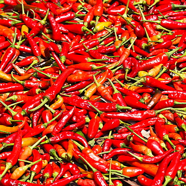 Abundance of red chili peppers