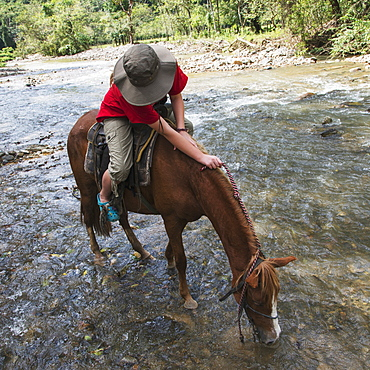 A Horseback Rider Stops For The Horse To Drink Water From A Stream, Finca El Cisne, Honduras